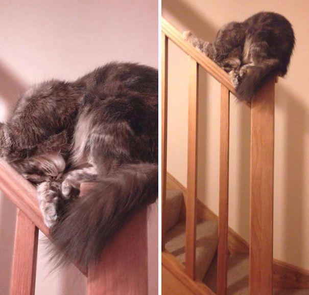 Uyuyan kedi #7