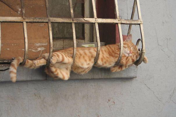 Uyuyan kedi #8