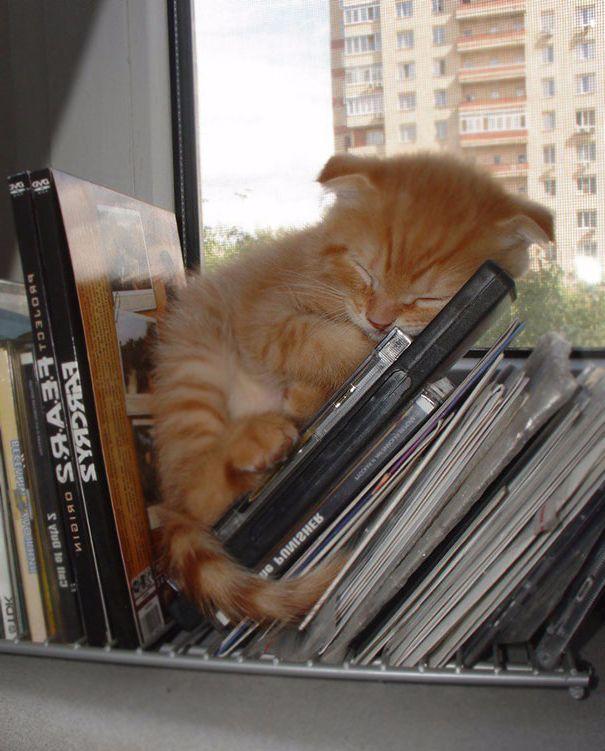 Uyuyan kedi #11