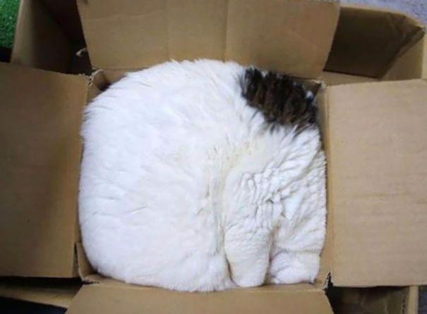 Uyuyan kedi #5