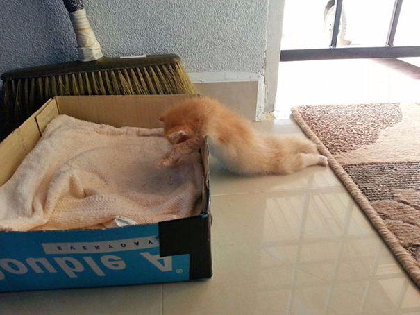 Uyuyan kedi #1