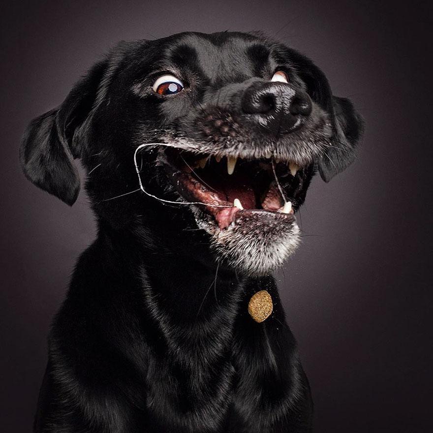 Köpekler Mamalarını Havada Nasıl Yakalar ?